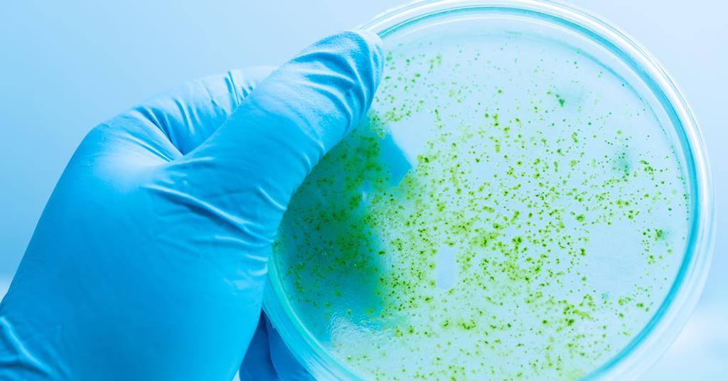 Cyanobacteria engineered to accept external electricity turn carbon dioxide into fuel
