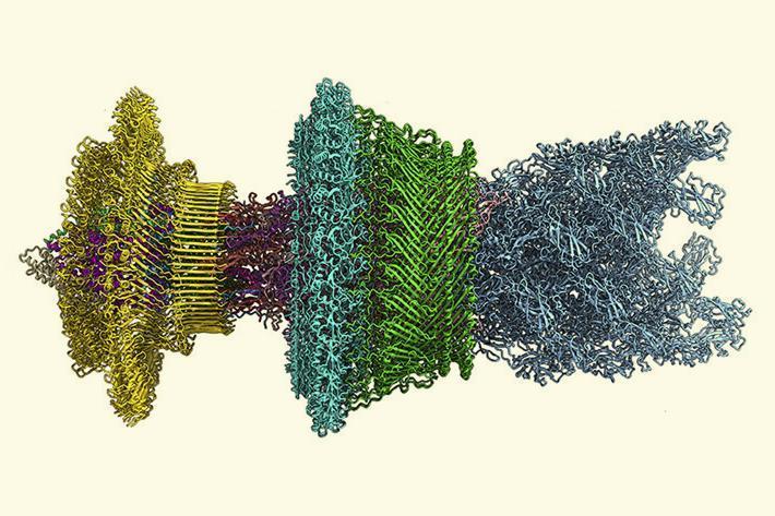 Nature's nanomachines