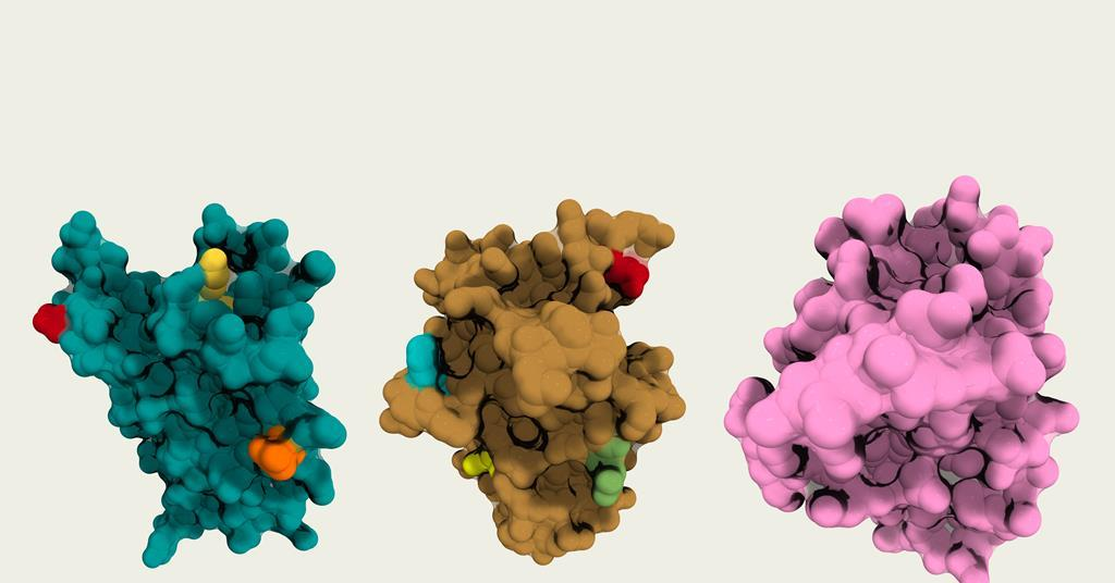 Fully synthetic proteins make tailored medicines