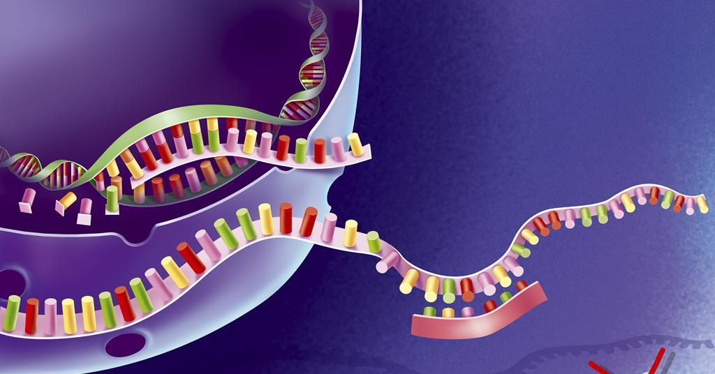 Method to make unusual oligonucleotides could be a boon for gene therapy drugs