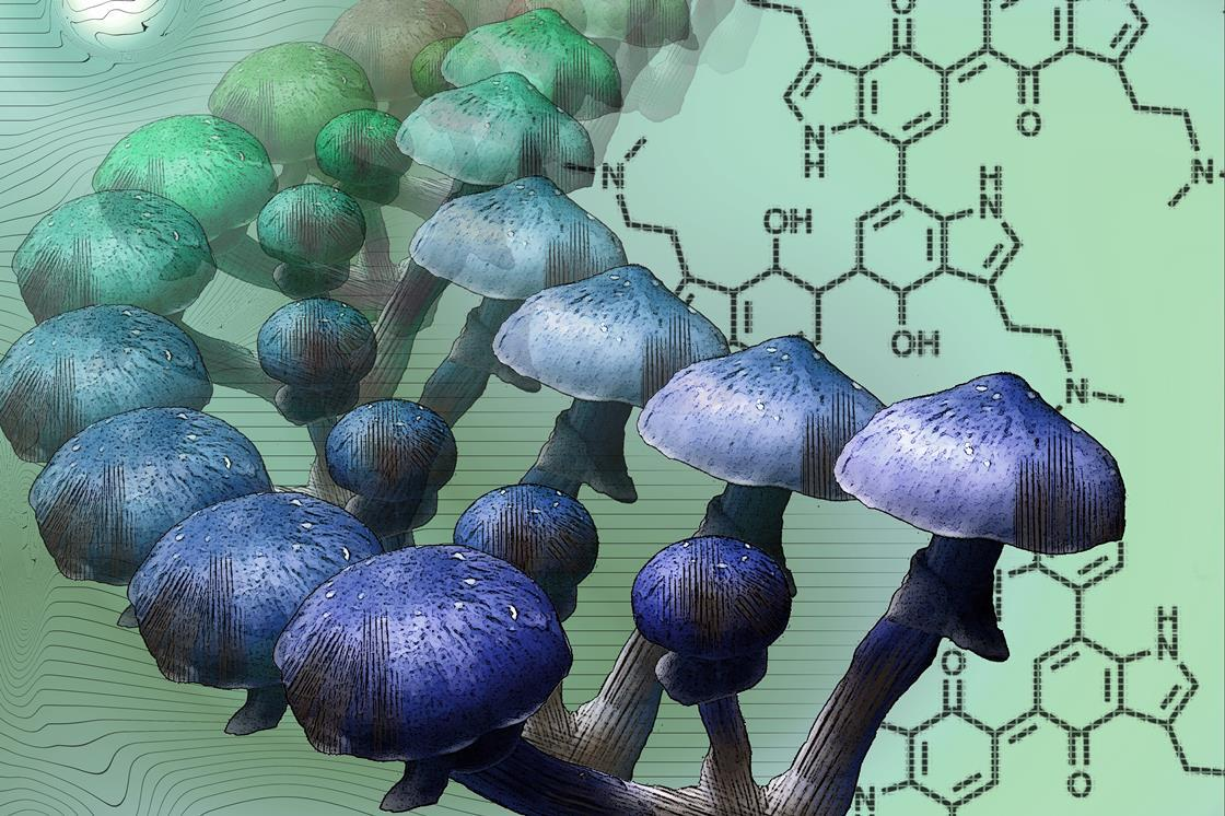 Mystery of why magic mushrooms go blue solved