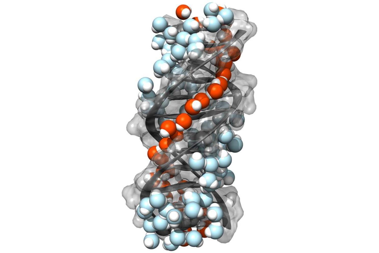 Image result for water and dna