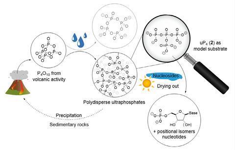 طرحی که با استفاده از اولترا فسفاتها واکنشهای فسفوریلاسیون قابل قبول را نشان می دهد
