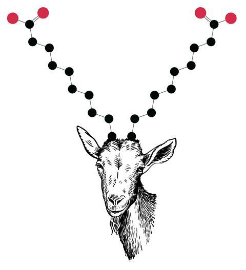 An image showing a goat whose horns have the structure of capric acid