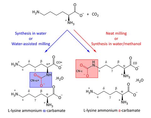 Un esquema que muestra las estructuras moleculares propuestas del ε-carbamato de amonio L-lisina