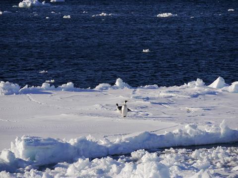 Una imagen que muestra pingüinos en un día soleado