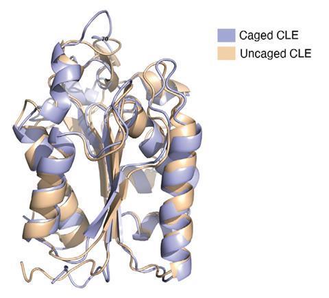 تصویری از دو نوار مارپیچی که ساختارهای پروتئینی را نشان می دهند