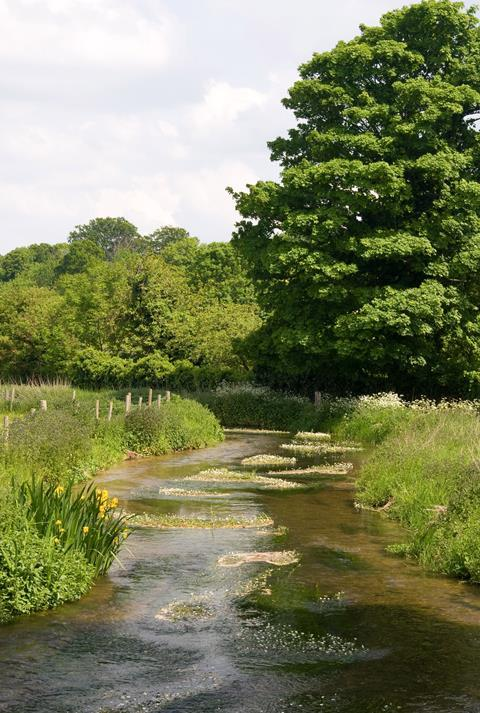 A photo of a river in a rural landscape with trees and flowers