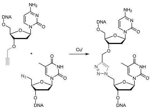 DNA synthesis is just a click away | Research | Chemistry World