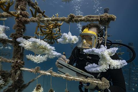 An underwater researcher examines a coral nursery