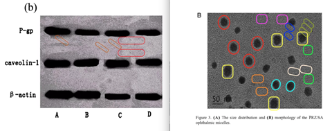 An image that shows microscope images