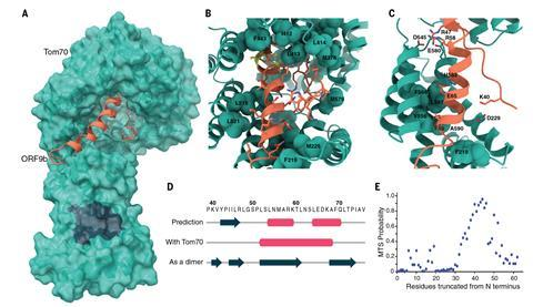An image showing a cryo-EM structure
