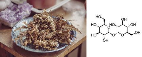 An image showing a resurrection plant and the structure of trehalose